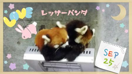 徳島動物園01.jpg